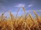 Agentia pentru Finantarea Investitiilor Rurale